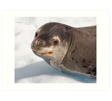 Lost Smiling Seal, Miles from Home Art Print