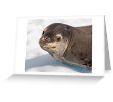 Lost Smiling Seal, Miles from Home Greeting Card