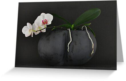 WHITE ORCHID BLACK VASE by Thomas Barker-Detwiler
