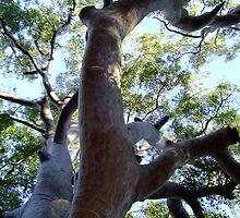 One BIG Tree by reflector