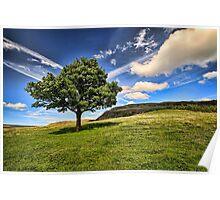 The Lonley Tree at Dovestones Poster