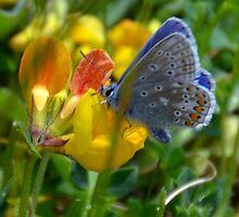 Silver Studded Blue........... by lynn carter