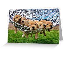 Cute Retriever Labrador Puppies in Hammock Greeting Card