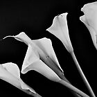 CALLA LILY  by Thomas Barker-Detwiler