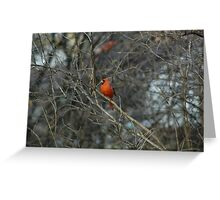 Pretty in Red. Greeting Card