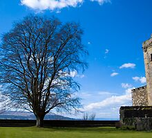 Stirling: The Tree and the Castle by Stewart Priest