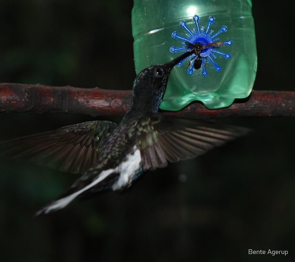 Hummingbird by julie08