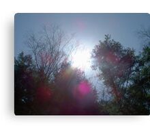 The Colors of Sunlight Canvas Print