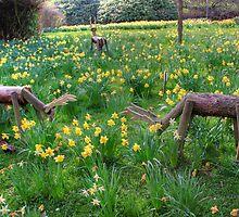 Oh Deer by Tom Gomez