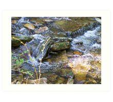 Creekside View Art Print