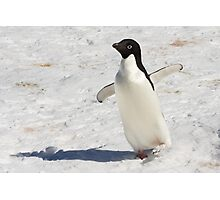 "Adelie Penguin  ~  ""The Dancer"" Photographic Print"