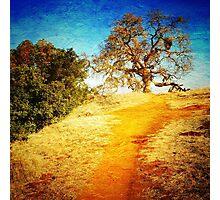 Pearson-Arastradero Preserve Photographic Print