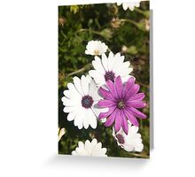 Shades of purple flower photography Greeting Card