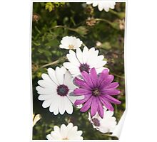 Shades of purple flower photography Poster