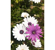 Shades of purple flower photography Photographic Print