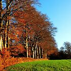 On the edge of the autumn forest by jchanders