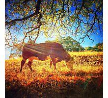 Las Trampas Wilderness Photographic Print