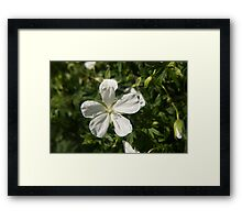 Foxglove flower photography  Framed Print