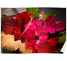 Hibiscus Offerring Poster