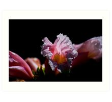 Images of the Tropical Far North Queensland pic 30 Art Print
