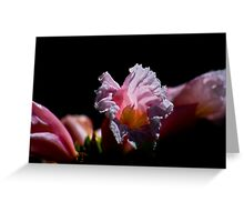 Images of the Tropical Far North Queensland pic 30 Greeting Card