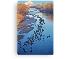 Geese on the South Platte Canvas Print