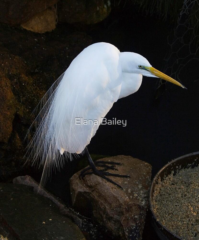 Heron by Elana Bailey