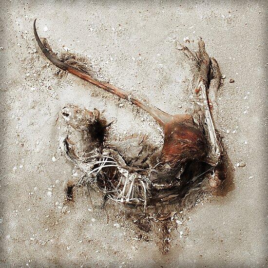 Dead Roo by wellman