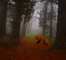 Bear in the Pines: Collaboration. by George Petrovsky