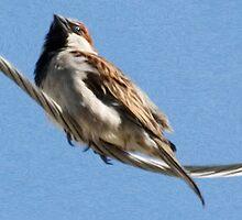 House Sparrow (Card) by Gracey