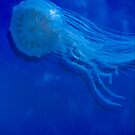 Blue Jellyfish by Tom Miles