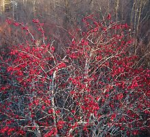 Winterberry by RVogler