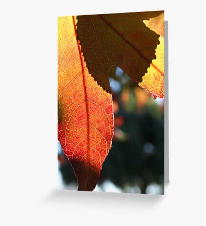 Autumn leaf and shadow Greeting Card