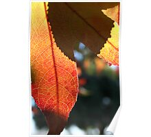 Autumn leaf and shadow Poster