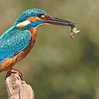 Kingfisher 4 by Alan Forder