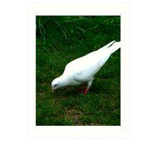 White Dove Art Print
