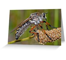 Robber Fly Greeting Card