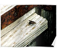 Sill Fly Poster