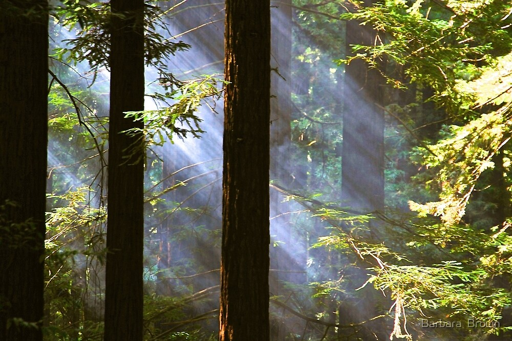 Shining Through the Giants by Barbara  Brown