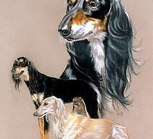 Saluki by BarbBarcikKeith