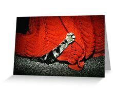 Now Where Can Baci Be? Greeting Card