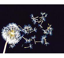 Flurries Photographic Print