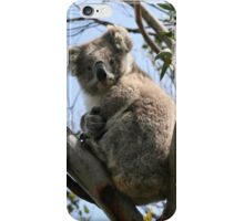 Koala in the Wild iPhone Case/Skin