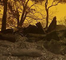 Birkenhead Park by Paul James