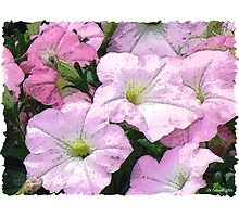 Watercolour Petunias by © CK Caldwell IPA