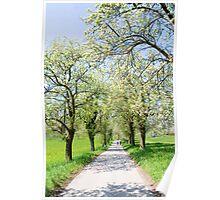 Spring Walk Poster