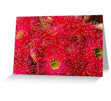 Red Flowering Bloodwood Greeting Card