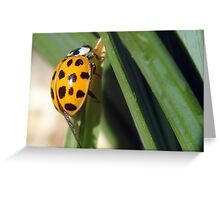 Orange With Spots... Free State, South Africa Greeting Card