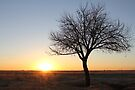 Winter Sunrise... Free State, South Africa by Qnita