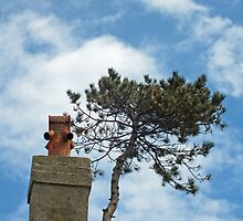 Tree Top and Chimney Pot by Yampimon